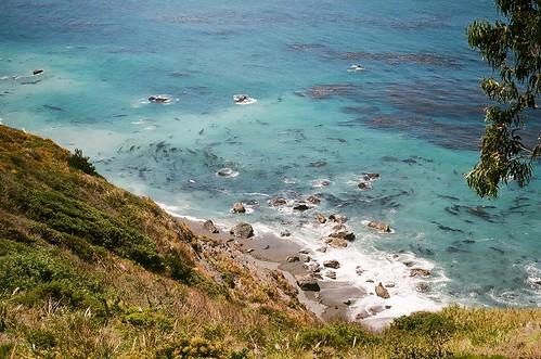 sea lions on beach near gorda, ca