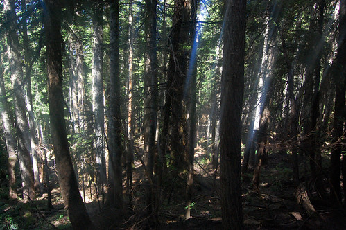 Vancouver - Cypress Mountain, Eagle Bluffs Hike (25)