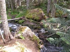 Alternate creek crossing.