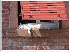 Dreaming cat
