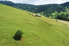 highlandscape (kosova cajun) Tags: summer tree barn landscape highlands cabin sheep stan haystacks pasture shade haystack kosova kosovo hillside pastoral dele alpinemeadow kosov rugova peisazh bog rugov pastoralscene bjeshktenemuna accursedmountains bjeshk