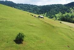 highlandscape (kosova cajun) Tags: summer tree barn landscape highlands cabin sheep stan haystacks pasture shade haystack kosova kosovo hillside pastoral dele alpinemeadow kosovë rugova peisazh bogë rugovë pastoralscene bjeshkëtenemuna accursedmountains bjeshkë