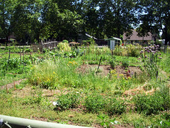 Lents community garden!