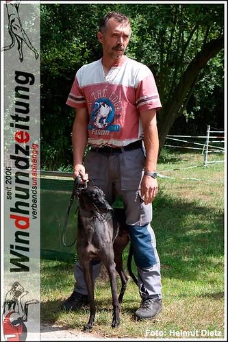 Greyhound aus Holland