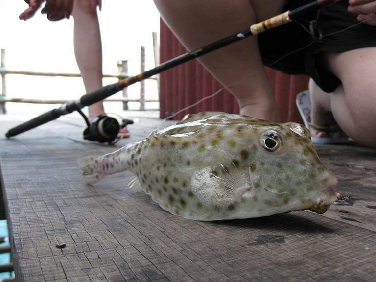 susu's catch