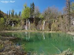 Croatia#31 (Saori_) Tags: green nature water beautiful croatia olympus  worldheritage  plitvicka  cristalclear