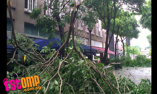 Heavy morning storm topples trees across island