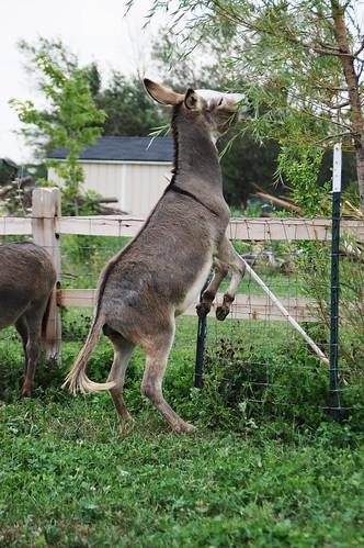 07_donkey_hop