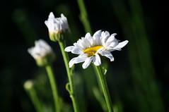 Blossom (Jenn (ovaunda)) Tags: utah nikon 70300mm cedarcity d90 nikonafnikkor70300mmf456g jennovaunda ovaunda