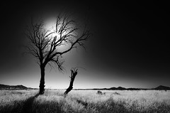 ( Ali Shokri / www.alishokri.com) Tags: light sky bw sun mountains tree nature landscape iran azerbaijan scene tabriz