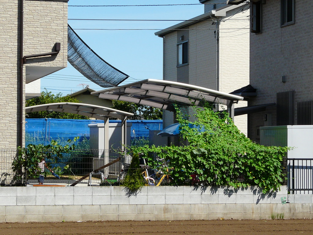 Spectacular Goya Curtain in Tokyo Suburbs