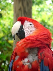 . (Tasmin_Bahia) Tags: blue red usa holiday tree green bird eye america pretty florida bokeh feathers parrot colourful beady
