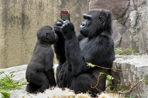 フリー写真素材, 動物, 哺乳類, ヒト科, ゴリラ, 家族・親子(動物), ゲーム機, ニンテンドーDS,