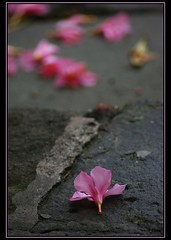 petals at the bottom (rafischatz... www.rafischatz-photography.de) Tags: colour rain czechrepublic tamron70300 orlickehory pentaxk200d