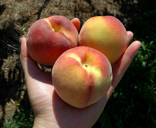 peaches_08