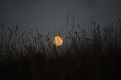 The stillness in the grass (Daydream shots) Tags: italia liguria dego savona totalphotoshop