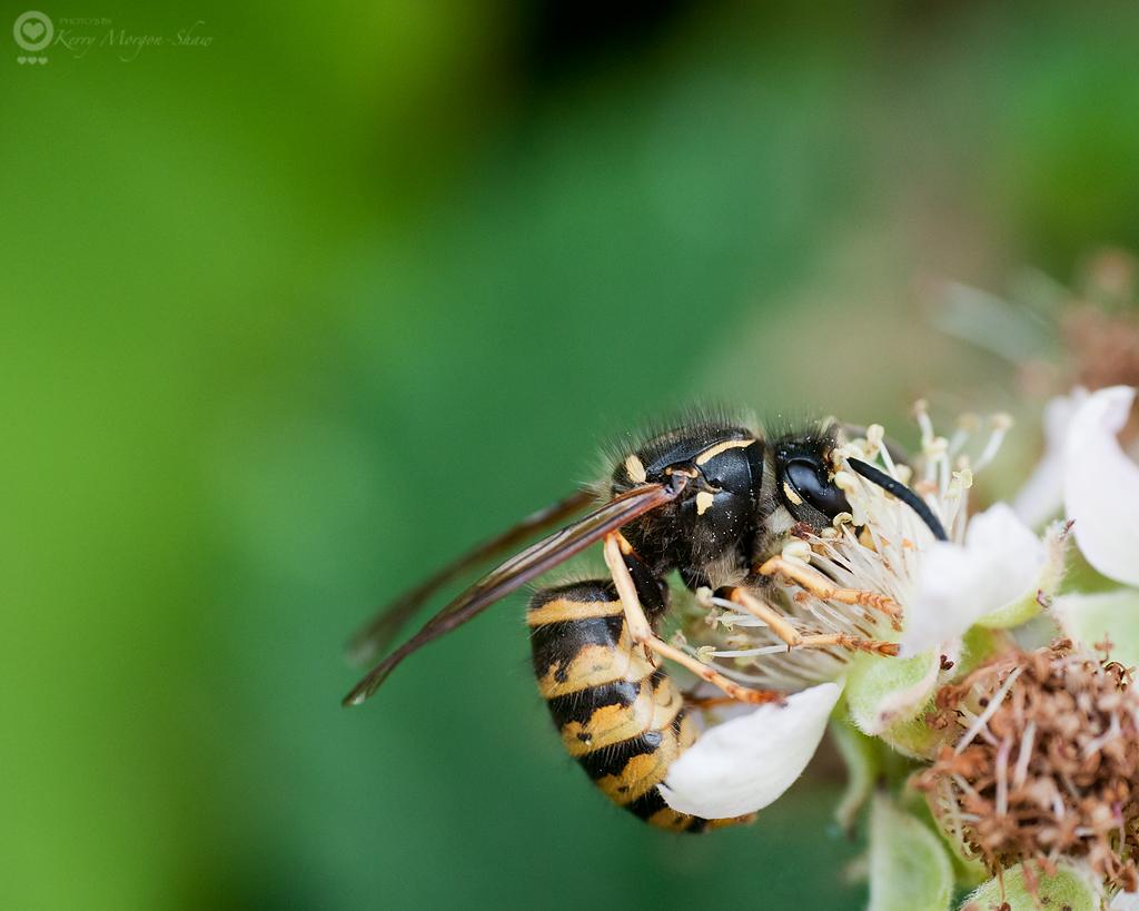 Wasp - 220/365
