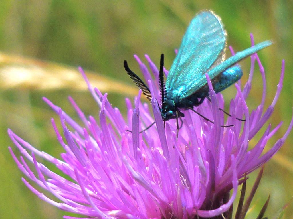butterfly farm dabruzzo region - photo#37