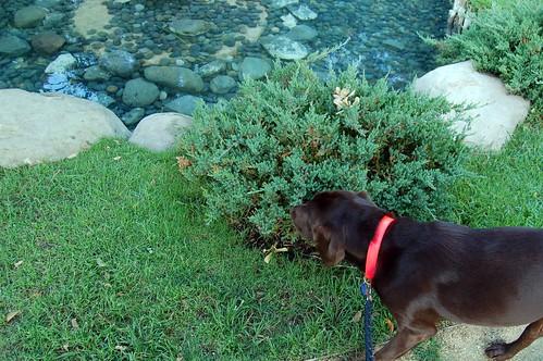 Bailey at Dog Days