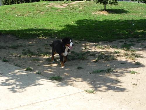 Columbus dog park 016