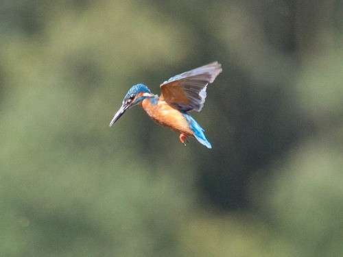 Day 222 - Kingfisher Day