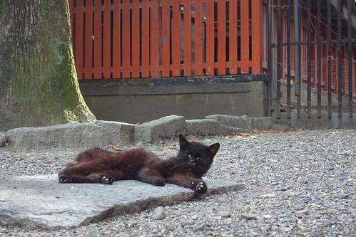 Today's Cat@2010-08-11