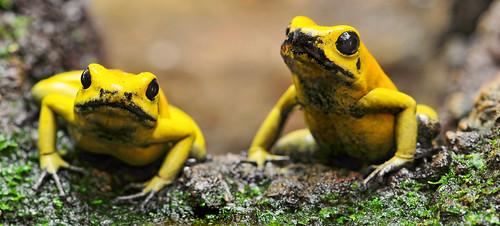 フリー写真素材, 動物, 両生類, カエル,