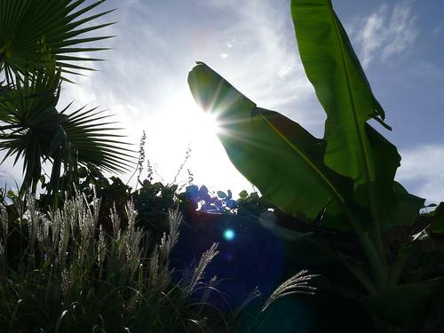 Sunrise in my backyard