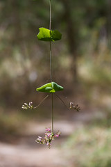 Hanging flowers Photo