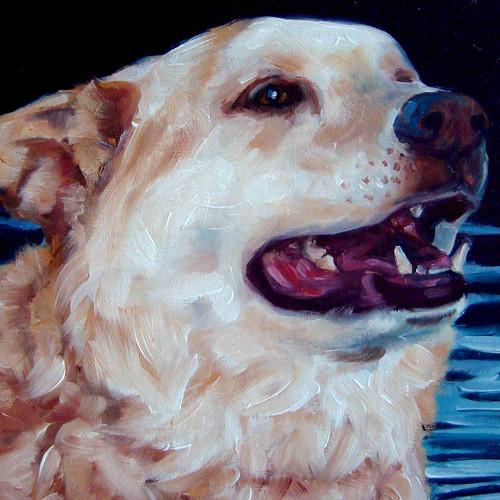 Labrador Retriever - Phoenix