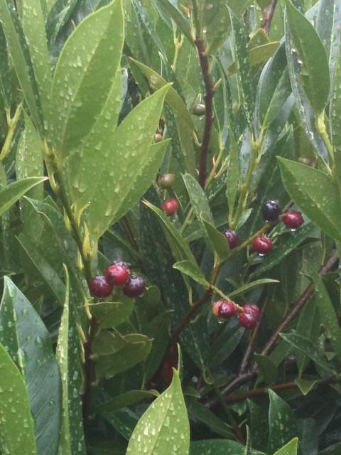 Rain On The Garden