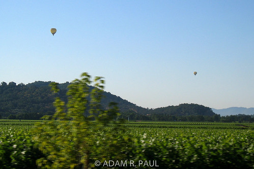 Balloons rising over Napa