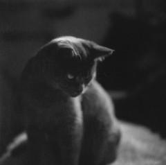 (ashley oostdyck) Tags: polaroid lucy closeuplens hasselblad500cm 664 autaut shesallgrownup