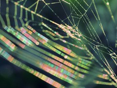 Rainbow Spider's Web ~   (Heat Map ) (#1197) (protophotogsl) Tags: light color macro green rainbow bokeh spiderweb  heatmap protophotogsl mygearandmepremium mygearandme~4awardthread