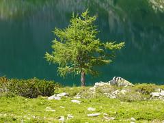 Baum 3 - Dirigent vorm Seeorchester (stiller-weiter-tiefer) Tags: lake tree green see stones steine grn baum simplysuperb updatecollection ucreleased