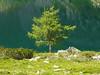 Baum 3 - Dirigent vorm Seeorchester (stiller-weiter-tiefer) Tags: lake tree green see stones steine grün baum simplysuperb updatecollection ucreleased
