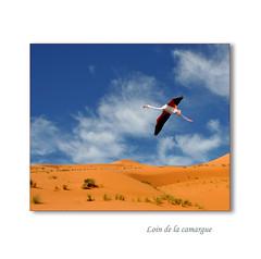 loin de la camargue (c.ledur) Tags: mer heron nature eau ciel marais oiseaux vgtation flamant