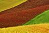 Natural Patchwork (carlo tardani) Tags: landscape pisa campagna colori campi orciano nikond300 bestcapturesaoi tripleniceshot mygearandmepremium mygearandmebronze mygearandmesilver mygearandmegold mygearandmeplatinum mygearandmediamond mygearandmeplatinium incrocidicolore febbraio2011challengewinnercontest