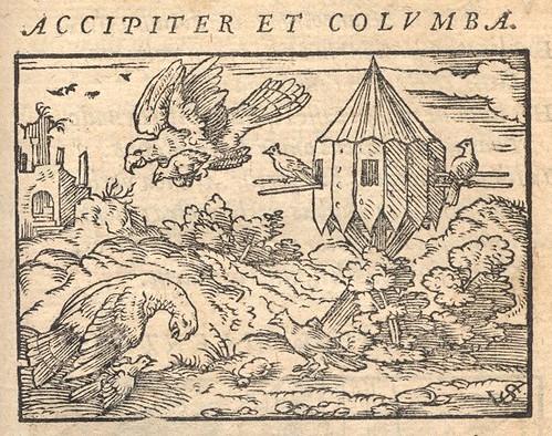 Milvus et Columbae - Osius
