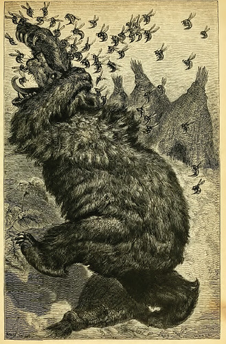 Ursus et Apes