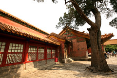 Imperial Gardens 23 (David OMalley) Tags: china city red beauty architecture capital chinese beijing palace forbidden empire imperial  forbiddencity dynasty emperor  grandeur  verbotenestadt citinterdite    verbodenstad cidadeproibida cittproibita yasakehir chineseempire    ipinagbabawalnalungsod cmthnhph