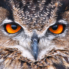Eagle Owl (Johan J.Ingles-Le Nobel) Tags: red portrait orange owl eagleowl screechowlsanctuary sigma150500 johanjingleslenobel