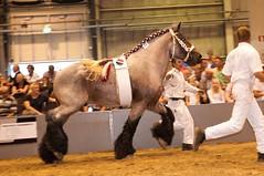 DSC_4634-218 Bloc van Damshof (Ton van der Weerden) Tags: horses horse de cheval van der nederlands belges ton draft 2010 shertogenbosch chevaux tentoonstelling nationale someren belgisch trait trekpaard trekpaarden weerden nationaletentoonstelling2010