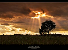 natural stage (D.Reichardt) Tags: sunset sun tree nature weather clouds germany landscape filter single rays mize cokin flickraward