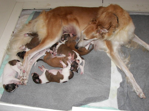 Kaya with Pups at 15 Days