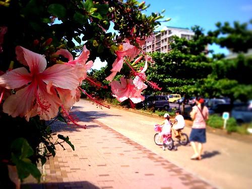 おはようございます。公園で自転車