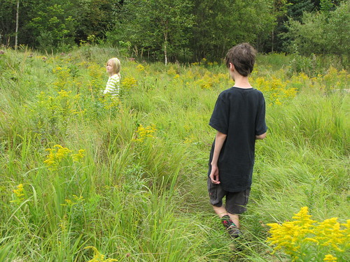 in the meadow at Falls Brook
