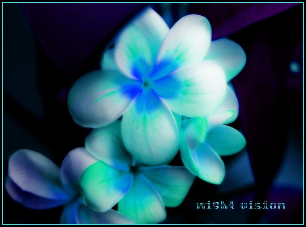 night~vision