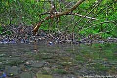 Mt Lebanon Creek (Bill Maksim Photography) Tags: lebanon stone creek three bill sticks high woods pittsburgh mt dynamic wildlife range hdr exposures maksim