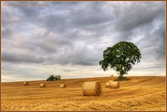Makin Hay (Shhhh it's straw) (Frank Kavanagh Photography) Tags: trees ireland summer sky colour nature barley clouds landscape dusk farm harvest straw eire fields hay bales emeraldisle hdr irlanda carlow mywinners irishphotographers kilkennyphotographers frankkavanaghphotography